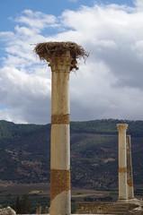 imgp3886 (Mr. Pi) Tags: nest ruin morocco volubilis archaeologicalsite