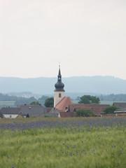 Blick auf Thurndorf mit der Pfarrkirche St. Jakobus (elisabeth.mcghee) Tags: wheat cornflower oberpfalz getreide kornblumen getreidefeld thurndorf sanktjakobuskirche