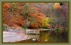 Rydal Water (williamwalton001) Tags: gate stonewall lakedistrict autumn colourimage landscape trees water lake legacy pinnaclephotography