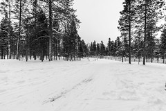 _DSC0242 (Alepan) Tags: finland finlandia lapponia circolopolareartico