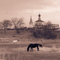 Horses (ilbes3001) Tags: horse landscape suzdal пейзаж суздаль лошади