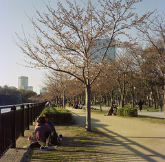 Hanami Season in Osaka Castle Park (Ced') Tags: 6x6 japan analog cherry blossom jo mat 124g  april sakura osaka koen yashica hanami 2015