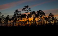 IMG_0213 ENP (JRCmoreno) Tags: blue trees winter sunset sky grass florida bluesky swamp everglades evergladesnationalpark sabana