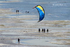 The wind is blowing (Louis Shum) Tags: blue summer people dog kite playing men beach water birds yellow composition fun iso100 sand niceshot wind awesome ngc watching wave windy olympus blow 300mm f11 goodphoto e510 1640 louisshum