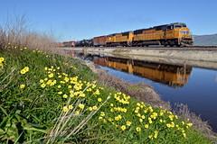 UP MRVSJ-07 (caltrain927) Tags: california ca railroad reflection mixed pacific union alviso freight manifest uprr emd sd70m
