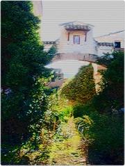 Siempre bella (3)/Always beautiful (3) (margabel2010) Tags: contraluz hojas ventana pared casa flora rbol entrada arco virgen casita paredes tejados arcos estructura ramas airelibre contraluces arbustos solysombra casasrurales trepadoras tejadillos florasilvestre
