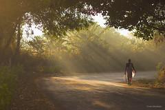 Happy Women`s Day (Pratik Bhakkad) Tags: road street travel trees india texture fog rural canon flickr 85mm maharashtra rays pune konkan internationalwomensday womensday 550d canon550d