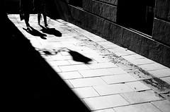 Walking (Diego Fernandez Zapico) Tags: madrid light black yellow canon blackwhite shadows streetphotography plazamayor cibeles canoneos650 50m 50mm18 madridstreet
