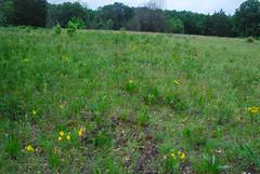 Dry Prairie (wackybadger) Tags: wisconsin kettlemorainestateforest wisconsinstateforest walworthcounty kettlemorainestateforestsouthernunit dryprairie wisconsinstatenaturalarea sna230 messingerunitwestrailroadsandprairie messinger53110