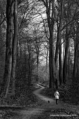 Auf dem Holzweg (grafenhans) Tags: white black sony alpha 700 tamron wald weiss baum schwarz weg spaziergang a700 alpha700 grafenwald 2870200 bckenbusch