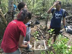 28-Env&CivSoc-World-Water-Day-LCK-Cleanup-26Mar16 (Habitatnews) Tags: mangrove capt nus worldwaterday limchukang iccs
