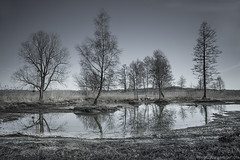 Narcissisme (photofabulation) Tags: trees water reeds switzerland eau europa europe suisse arbres paysage roseaux vaud romandie narcissisme