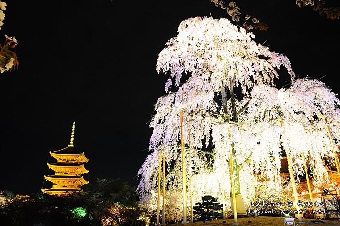 2014東寺夜櫻 (6).jpg