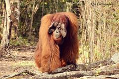 ANIMAL (GA Natural Light Photography) Tags: animal animals photography animallover wildlife binatang animalphotography wonderfulanimal wildlifeplanet planetofanimals thegreatanimal