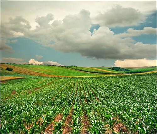 Pannonian field