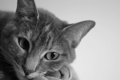 Ramona Sanchez Neira (Campanero Rumbero) Tags: beauty animal canon monocromo colombia bogota shot cara bn ojos gato gata felino mirada rostro gatita nariz disparo bello orejas ramonasanchezneira