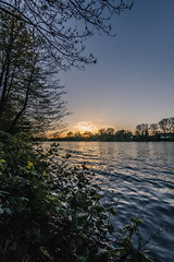 The sun is almost gone (Fenchel & Janisch) Tags: nature germany spring blossom frankfurt sommer frankfurtammain springtime frhling fruehling