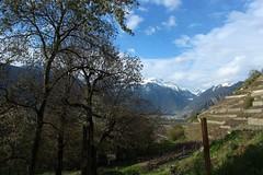 avril (bulbocode909) Tags: nature suisse vert bleu ciel arbres nuages vignes printemps paysages valais