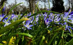 Gräsrotsnivå / grassrootlevel (camillagarin) Tags: lagt fotosondag fs160403