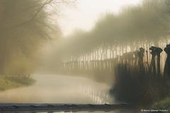 Mystic landscape (BiancaValkenierPhotoArt) Tags: wood morning trees mist misty fog backlight river landscape spring nevel outdoor natuur serene bos lente gelderland dodewaard lentedag debetuwe bomem ochtendnevel nevelig mysticochtendmist delingeriver