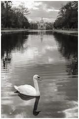 Wrest Park Swans (Darwinsgift) Tags: park lake english heritage architecture swan pond nikon f14 voigtlander bedfordshire swans 58mm sl2 wrest d810 slii