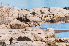 _DSC4805.jpg (orig_lowolf) Tags: usa dog nature oregon nikon flickr lakeoswego turkeyvulture d300s sigma150500mmf563afapodgoshsmtelephotozoom