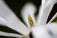 Rotterdam 10-04-2016 SM-4 (Pure Natural Ingredients) Tags: park flowers holland garden spring nikon outdoor nederland thenetherlands sigma botanic tuin f28 bloemen euromast zuid 105mm niceweather voorjaar schoonoord d90 botanishe