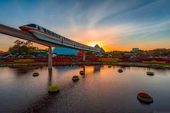 Monorail Monday - A Flower & Garden Sunset (MattStemerman) Tags: sunset epcot nikon disney disneyworld d750 monorail wdw waltdisneyworld flowerandgardenfestival