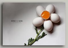 Flor de Primavera - Amparo Garca Iglesias (Amparo Garcia Iglesias) Tags: flores primavera photos huevos fotos garcia iglesias amparo yema gallinas