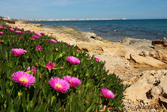 Torrevieja view (ChristineGibbs, trying to keep up!) Tags: pink flowers water seaside spain rocks torrevieja