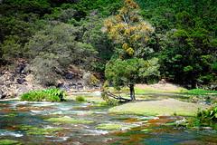 Ooty: Pykara River and Falls (deepgoswami) Tags: india river falls waterfalls tamilnadu ooty pykara pykarafalls pykarariver