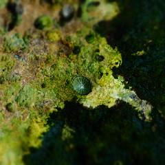 Another planet 324 (vincent gouineau) Tags: tretat gouineau vincentgouineau
