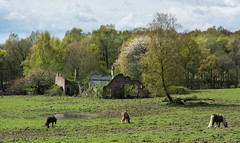 old farm in the forest (Harm Roelofzen) Tags: horses forest woods farm arnhem bos pferde wald veluwe veluwezoom paarden natuurmonumenten boerderij gelderland