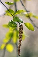 Spring 2016 - 803 LBG (Lostash) Tags: life flowers plants nature spring flora seasons