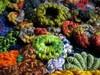 LBS-close-3731 (freeform by prudence) Tags: crochet organic freeform prudencemapstone