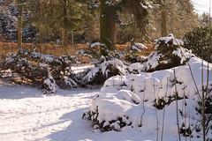 022/2016 (puste66blume) Tags: schnee winter stadtpark limbachoberfrohna alpha58 inesbilder puste66blume 3662016