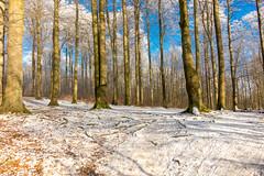 Winter,Hasseldieksdamm-00374 (Rainer Beyer) Tags: schnee winter snow de deutschland frost kiel schleswigholstein