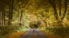 Tree Tunnel (Augmented Reality Images (Getty Contributor)) Tags: road autumn trees leaves forest woodland landscape scotland countryside perthshire tunnel lane