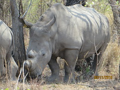 Zimbabwe (209) (Absolute Africa 17/09/2015 Overlanding Tour) Tags: africa2015