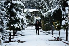 IMG_1900 (eminkoyuncu) Tags: winter snow nature
