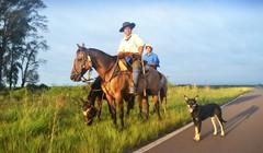 El curuzucuateo (Eduardo Amorim) Tags: horses horse dog chien southamerica argentina criollo caballo cheval caballos perro cachorro cavalos corrientes pferde herd cavalli cavallo cavalo gauchos pferd chevaux gaucho cavall  amricadosul gacho amriquedusud  gachos  sudamrica suramrica amricadelsur sdamerika crioulo caballoscriollos criollos  tropillas americadelsud tropilhas tropilla crioulos cavalocrioulo americameridionale tropilha caballocriollo eduardoamorim cavaloscrioulos provinciadecorrientes corrientesprovince curuzucuati