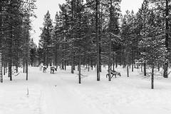 _DSC0346 (Alepan) Tags: finland finlandia lapponia circolopolareartico