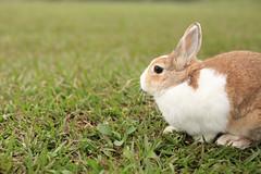 (ina070) Tags: rabbit nature animals canon taiwan taipei    6d   canon6d