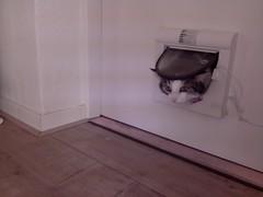 20160211-140343-i-1 (Catflap central) Tags: camera dog pet cats woof cat pi raspberry meow doggie catdoor catflap kattenluik katzenklappe catflapj2nnl taggingasdoguntilautotagginghasanoptout robotaggingisthedevil