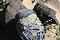 Desert Gold Dust, Death Valley, January 2016 (Bob Palin) Tags: california 15fav usa nationalpark outdoor deathvalley club100 100vistas instantfave orig:file=2016012804807