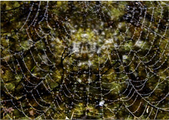 Revealed (foggyray90) Tags: abstract wet dof outdoor web spiderweb dew bejewelled