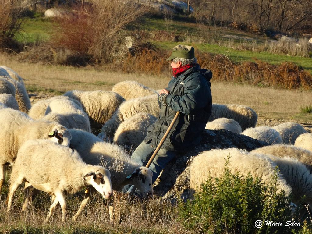 Águas Frias (Chaves) - ... o pastor e o vigiando o seu rebanho ...