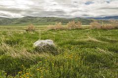Fiddlenecking (socaltoto11) Tags: california mountains green spring cloudy hiking stormy wildflowers westcoast stormyweather rainydays canonphotography fiddlenecks clouddeck windwolvespreserve kerncountycalifornia nationalpreserves westcoastmountainranges