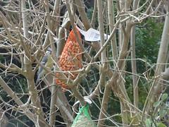 DSC02022 (1) (Enrico Luigi Delponte) Tags: birds sony vogels uccelli sonyfuncamera