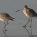 walk,  together (nosha) Tags: ocean california ca sea usa seascape bird water beautiful beauty coast pacific shore pacificgrove avian nosha